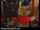 Dancing bear party with lots of hot housewives Thumbnail